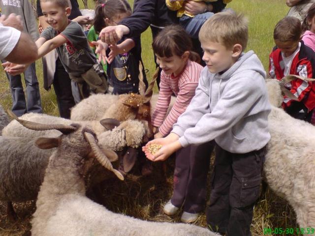 Ferme biologique Héjja-ökofarm en Hongrie