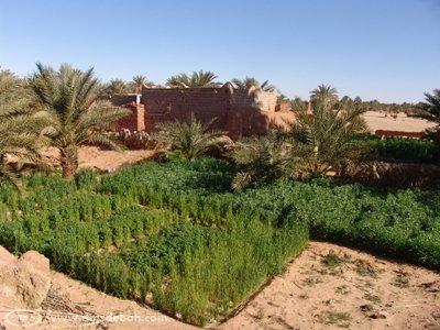 Jardin de la Foggara de Hanou (la plus ancienne de la région d'Adrar).