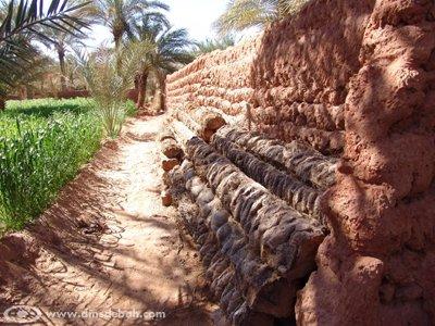 Les rondins de palmiers servent, entre autre, à la fabrication d'habitations.